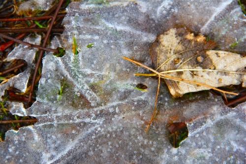 skeletal ice
