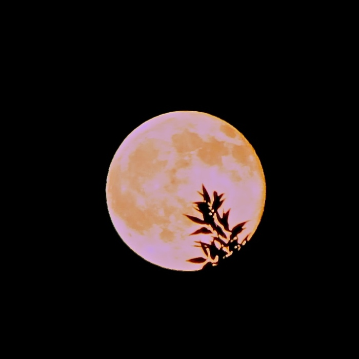 strawberrymoon16